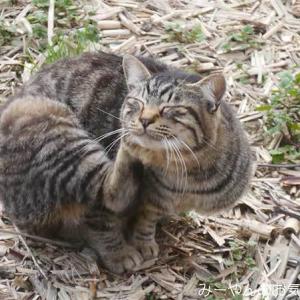 香川ヤドンマンホールの旅(19) 粟島のネコは警戒心が強いぜ!