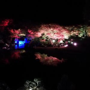 夜の耶馬渓、ライトアップされた紅葉を見てきました。