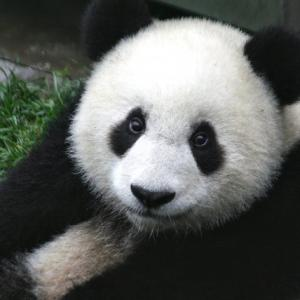 いざという時はパンダで支払い。あると便利なパンダ。