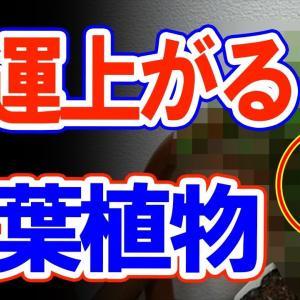 【風水】金運爆上げ!オススメ観葉植物5選!今すぐ確認!