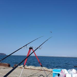 2020.3.26小樽港の釣り