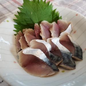 苫小牧で釣った大サバ・イワシを食しました