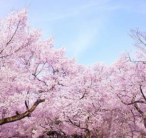 「桜を見る会」はどこが問題?首相の私物化?検証してみた!