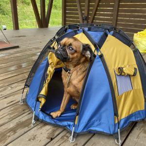 豪雨予報ならここだ 久しぶりのキャンプだホイ@PICA FUJIYAMA