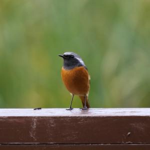 山田池公園鳥撮り(2019.11.17)