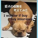 犬の保険を考えてみた