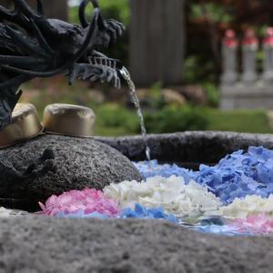 いわき市入遠野 円福寺「花手水」の紫陽花が素晴らしく綺麗でした!