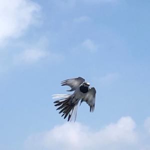鳥の子育て【夫婦つがいでヒナ鳥を死守‼️】人間顔負けの愛情に感動しました( ;∀;)
