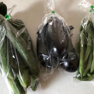新鮮野菜「農家の直売所」全部100円‼️取れたて新鮮✨