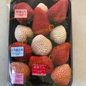 色々なイチゴがいっぱい(*^▽^*)🍓「品種の味比べをしました♬」一番おいしいのは❓