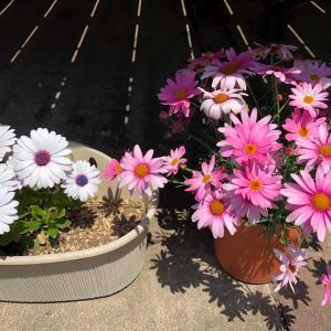 庭先の花🌸【花に癒される時間】色々な花が芽吹きます(*^-^*)