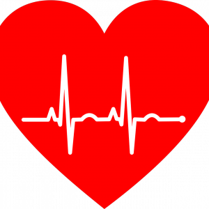 循環器科/腎臓科/泌尿器科(心臓疾患/腎臓疾患/尿結石)専門獣医がいる動物病院|全国一覧