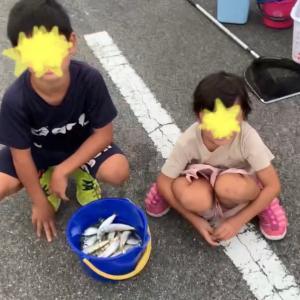 魚釣りで、ママカリ(サッパ)63匹釣れました