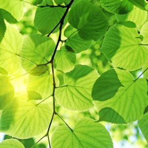#8『にじのかなたに』Epi.4 若い樹木(1)