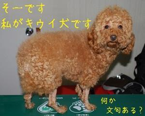 謎のキウイ犬