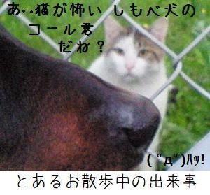 コールの葛藤@猫塾 1
