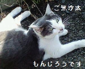 コールの葛藤@猫塾 2