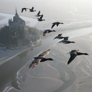 【この動画、すごい!】渡り鳥といっしょにモンサンミッシェル上空を飛ぶよ