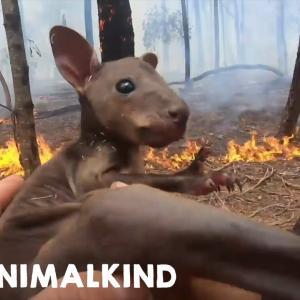 【この動画泣ける!】オーストラリア森林火災|人も動物も大変な事に、、、