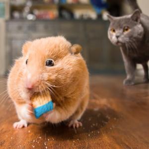 【この動画かわいい!】アーロンズアニマルズ|ネコのマイケル目力すごい!
