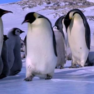 【この動画かわいい!】皇帝ペンギン・イワトビペンギン|ほっこりNG集!