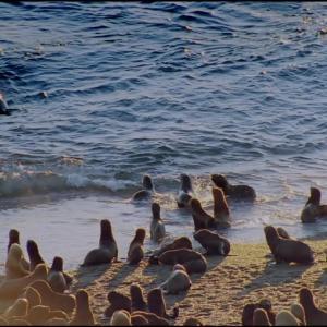 【この動画、すごい!】シャチ|クレバーな海の殺し屋はチームプレイが得意