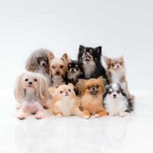 小型犬の生活習慣と健康寿命について。獣医師玉城の見解