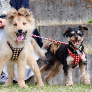「噛む可能性は?」犬の散歩中の「触っていいですか?」問題について