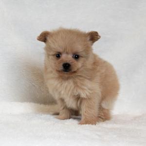 近年急増中のMIX犬はなぜ人気なの?寿命や性格はどうなの?