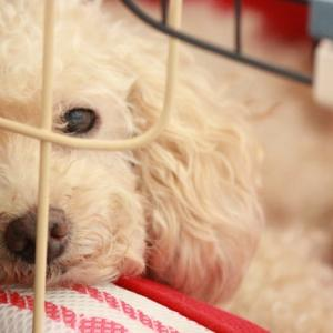 ペットショップで犬を買わずに保護犬を引き取るという選択肢はいかが?