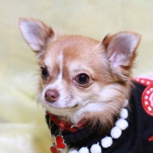 犬との冬の過ごし方!室温や被毛の種類、お留守番時の注意点