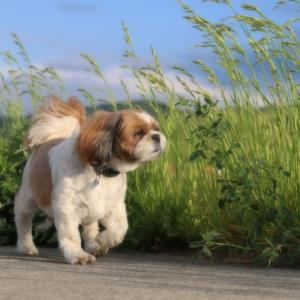 道端や公園などで捨て犬や迷子犬を見つけたらどうすればいい?その判断が1つの命を未来に繋ぐ