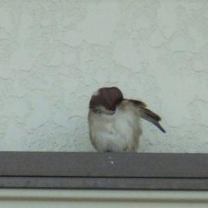 あの世から帰って来た雀