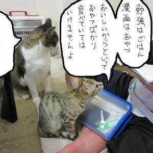最近よく行くコンビニを教えて! と 猫 と 音楽 と
