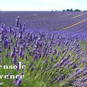 絶対訪れたい!南仏Valensole(ヴァランソル)の絶景ラヴェンダー畑