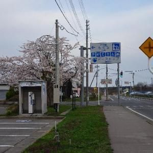 2018年4月27日 青森 秋田 桜三昧の旅です。((∩^Д^∩))