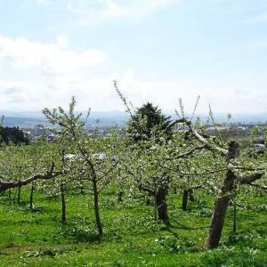 「道の駅なみおか アップルヒル」観光りんご園を散策です。