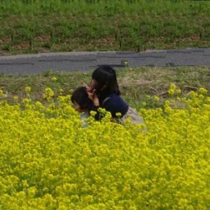 「道の駅にしめ(秋田県)」絶景の菜の花畑と気になる自作の軽キャンです。(「・ω・`)・・・ドレドレ