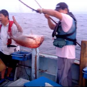大ダイ、シーバス、グレ釣り最高