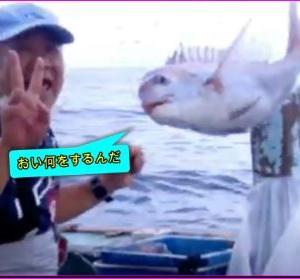 台風10号の合間にマダイ、イサギ釣り爆釣