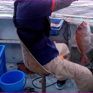 伊勢志摩のマダイ、イサギ釣りは苦戦でした