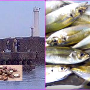 伊勢志摩の波切港でサビキでアジ釣りとサザエ取り