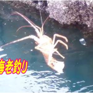 伊勢志摩の堤防で伊勢海老釣り、よく釣れる仕掛け