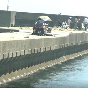 アオリイカ・アジ釣り・今日の釣り方