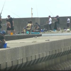 波切港のアオリイカ釣り・サビキ・アジ