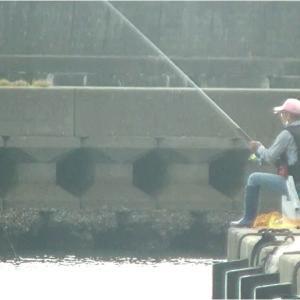 波切港・チヌ・アオリイカ釣り1