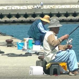 アオリイカ・カサゴ釣り・波切港1