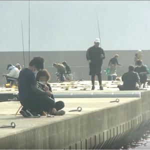 エギング、アオリイカ釣り・波切港