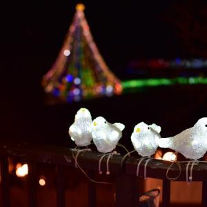 フリー素材の写真・夜景・イルミネーション 1