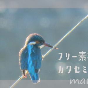 フリー素材・カワセミとススキの写真